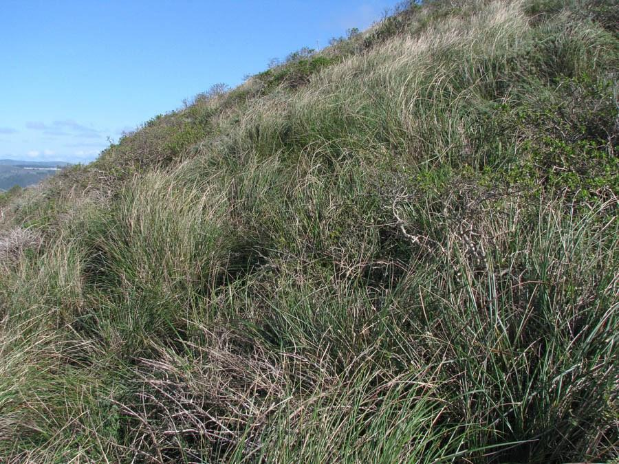 coastal prarie