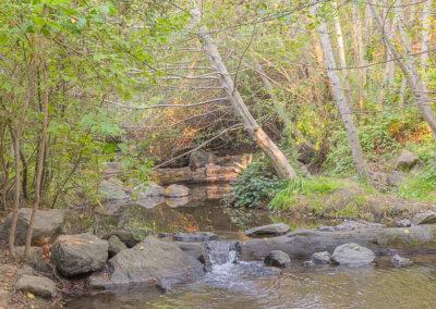 Co-sponsoring a San Pedro Creek clean-up